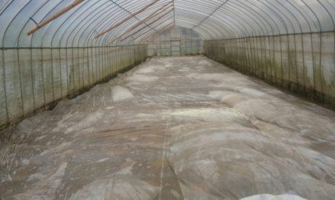 土壌の消毒