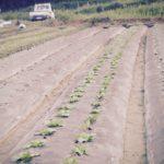 無農薬自然栽培