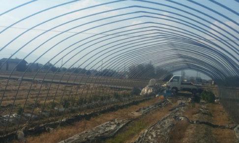 無農薬栽培ビニールハウス