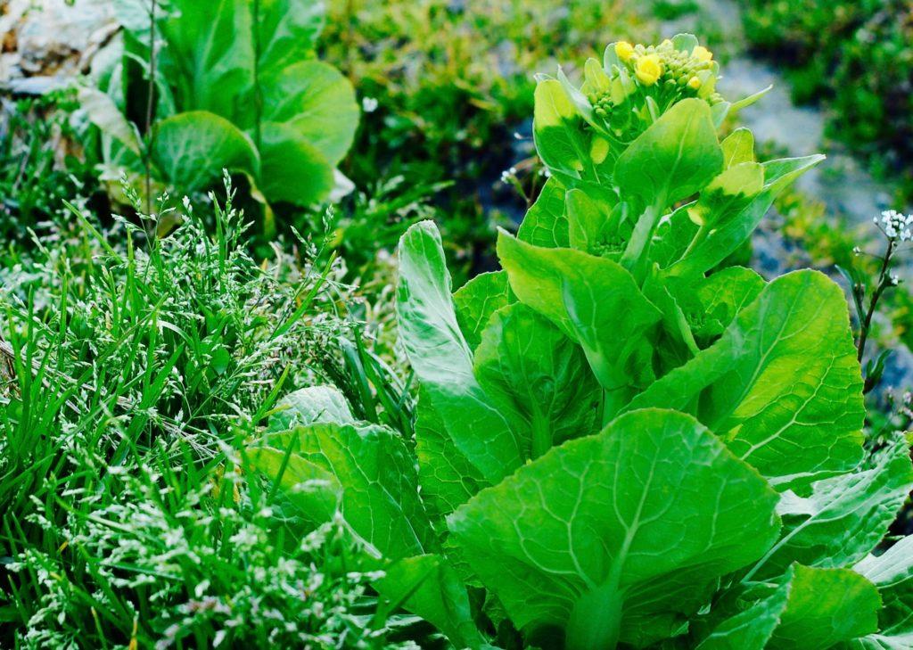 有機栽培と端境期