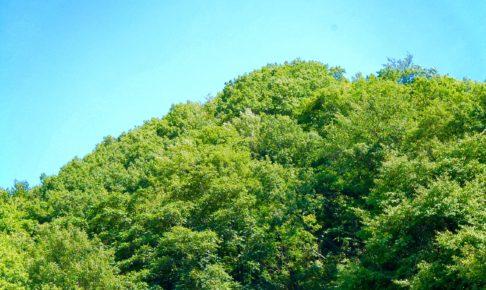 自然の大樹