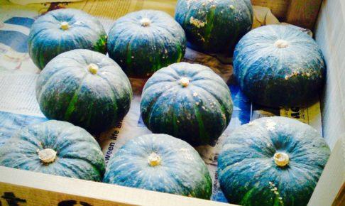 無農薬かぼちゃ