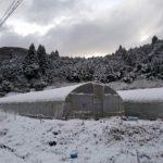 雪のトマトハウス
