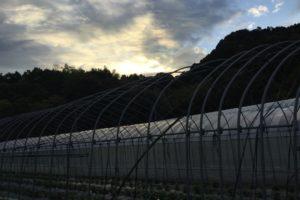 有機野菜の里 塔原