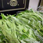 無農薬栽培 空芯菜