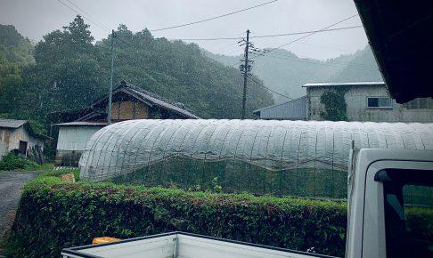 有機野菜の郷も大雨