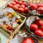無農薬トマトも終わり